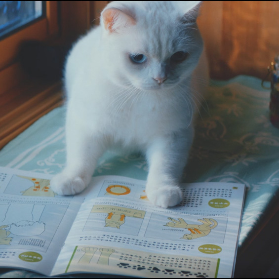 ねこ勉 Cats Learning